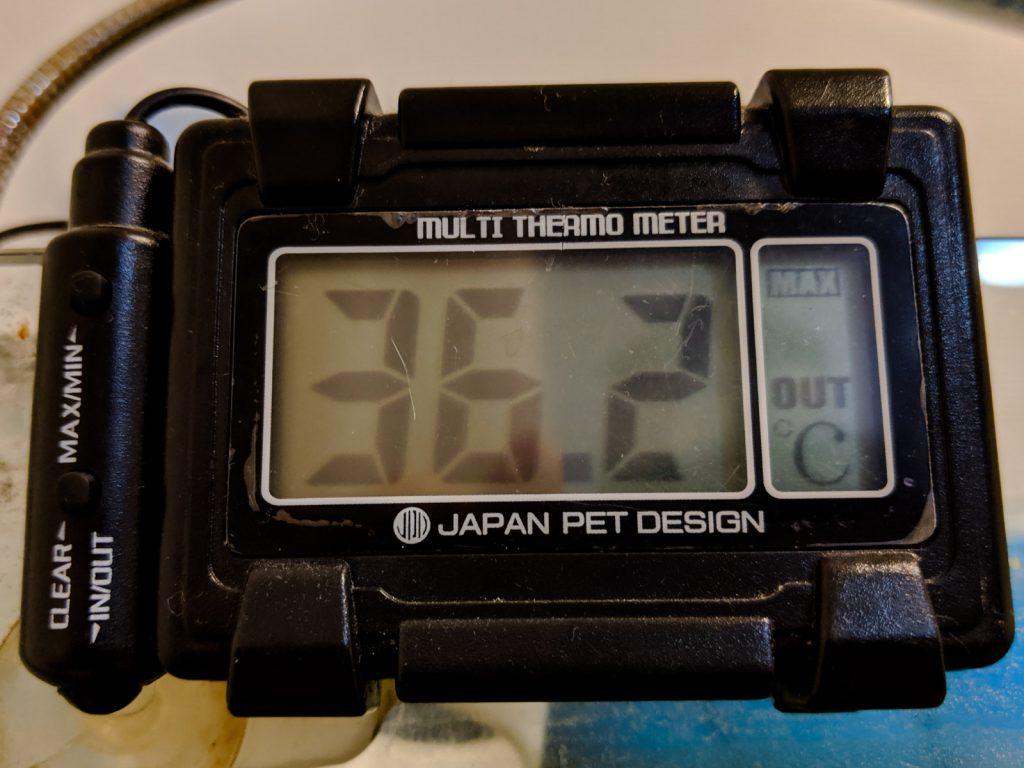 2019年8月6日 水槽設置部屋の最高室温は36.2℃